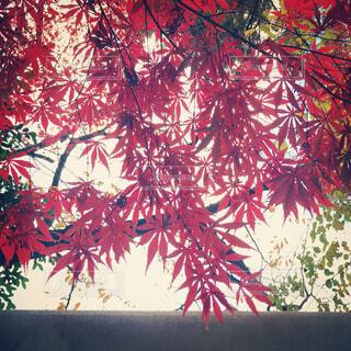 木の花の花瓶の写真・画像素材[1733514]