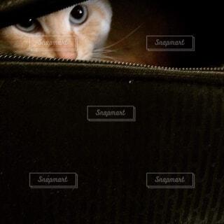 バッグの隙間からの写真・画像素材[1683894]