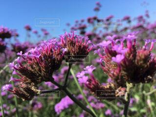 近くの花のアップの写真・画像素材[1682250]