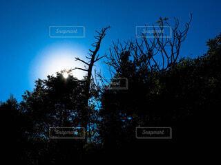 自然の写真・画像素材[61290]