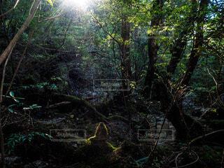 自然の写真・画像素材[64640]