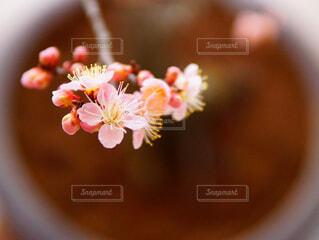 近くの花のアップの写真・画像素材[1829124]