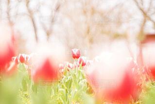近くの花のアップの写真・画像素材[1877449]