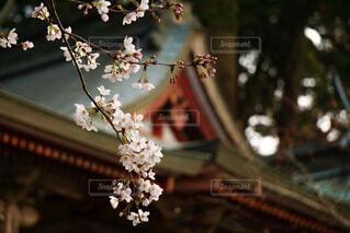 花の写真・画像素材[2073177]