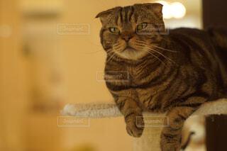 カメラを見ている猫の写真・画像素材[2093111]