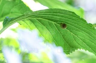 緑の植物のクローズアップの写真・画像素材[2204816]