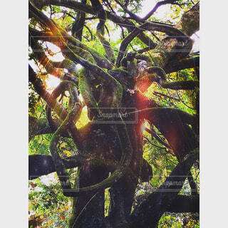forestの写真・画像素材[1683586]