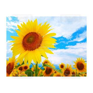 近くの花のアップの写真・画像素材[1685141]