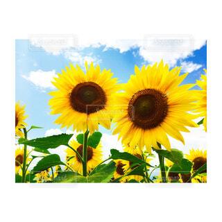 近くの花のアップの写真・画像素材[1685143]