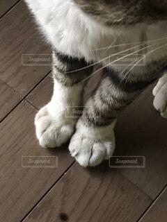 猫の手の写真・画像素材[2223872]