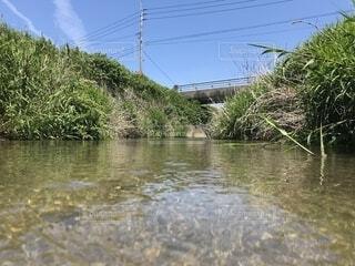 田舎の小川の写真・画像素材[1686629]