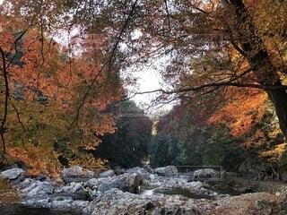 摂津峡の紅葉の写真・画像素材[1686737]
