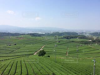 八女市の茶畑の写真・画像素材[1686811]