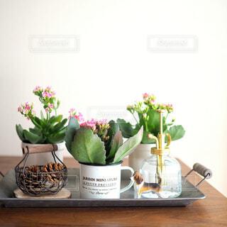 テーブルの上の多肉植物の写真・画像素材[1700807]