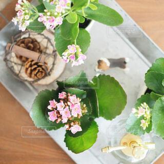 木製テーブルの上の多肉植物の写真・画像素材[1700809]