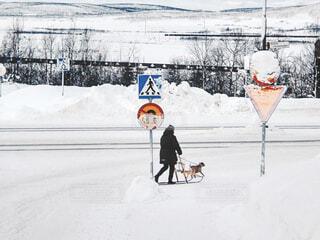 雪道をソリで犬を散歩させる女性の写真・画像素材[1700871]