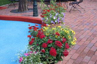 庭のベンチと花の写真・画像素材[1695524]