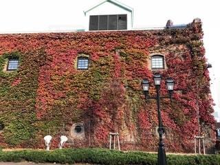 紅葉した蔦が絡まるレンガ造りの建物の写真・画像素材[2711678]