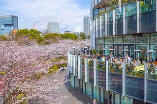 桜を見ながらテラスでランチの写真・画像素材[1688697]
