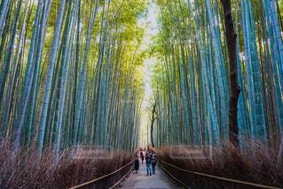 京都の竹林インスタスポットの写真・画像素材[1689120]