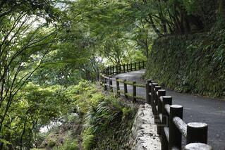 嵐山の山道の写真・画像素材[1689160]