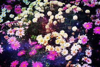 近くに紫の花のアップの写真・画像素材[1872350]