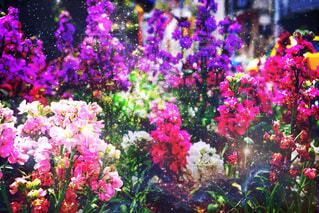 紫色の花一杯の花瓶の写真・画像素材[1872365]