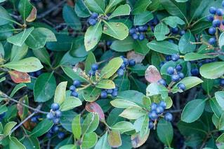 庭の植物の写真・画像素材[2468375]