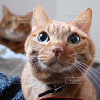 猫の写真・画像素材[293306]