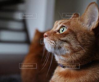 猫の写真・画像素材[293493]