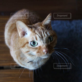 猫の写真・画像素材[319055]