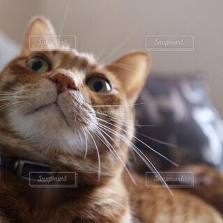 猫の写真・画像素材[331223]