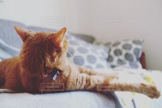 ソファの上で横になっている猫の写真・画像素材[785136]