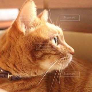 猫の横顔 - No.856703