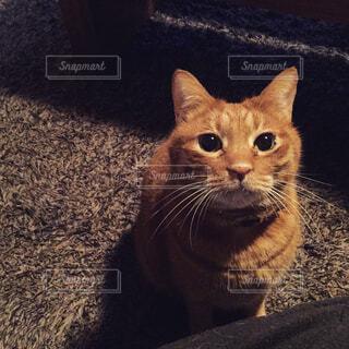 カメラを見ている猫 - No.857316