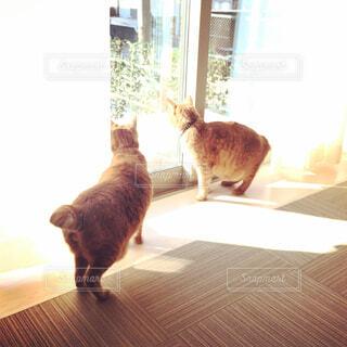 部屋に立っている猫 - No.857317