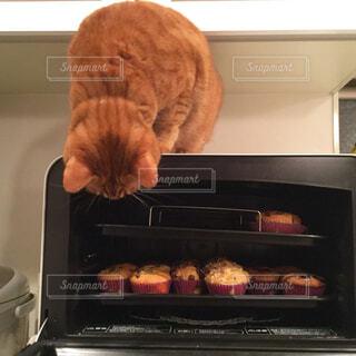 オーブンを覗き込む猫の写真・画像素材[857318]