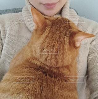 抱っこされる猫の写真・画像素材[924287]
