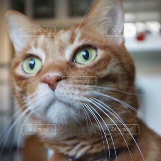 猫のアップの写真・画像素材[963277]