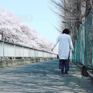犬とお散歩の写真・画像素材[1093475]