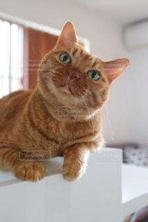 ボックスに座って猫の写真・画像素材[1295600]