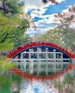 太鼓橋の写真・画像素材[1704849]