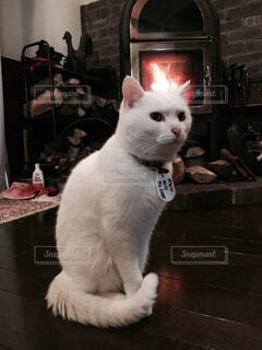 猫 - No.341668