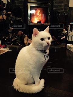 猫 - No.341669