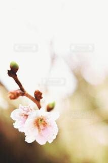 近くの花のアップの写真・画像素材[1691129]