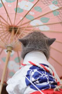近くに赤い傘持つテディー ・ ベアのアップの写真・画像素材[1690710]