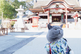 神社と猫の写真・画像素材[1690727]