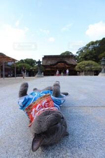 猫と神社の写真・画像素材[1690754]