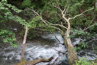 森の木の写真・画像素材[2277856]