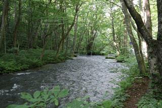 森を流れる川の写真・画像素材[2277858]